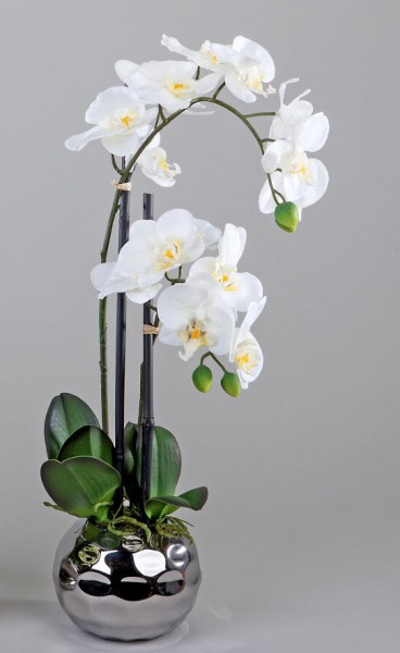 Formano Orchidee creme weiß 50 cm