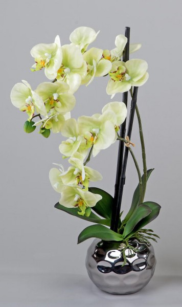 Formano Orchideegrün 50 cm